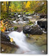 Autumn Passing Acrylic Print by Mike  Dawson