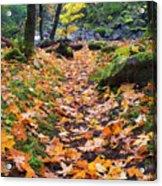 Autumn Path Acrylic Print by Mike  Dawson