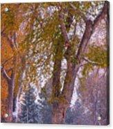 Autumn Snow Park Bench   Acrylic Print by James BO  Insogna