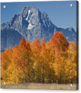 Autumn Splendor In Grand Teton Acrylic Print by Sandra Bronstein