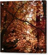 Autumn Sunshine Poster Acrylic Print by Carol Groenen
