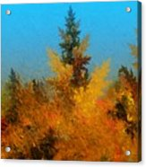 Autumnal Forest Acrylic Print by David Lane
