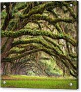 Avenue Of Oaks - Charleston Sc Plantation Live Oak Trees Forest Landscape Acrylic Print by Dave Allen