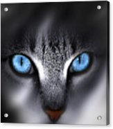 Baby Blues Acrylic Print by Cecil Fuselier