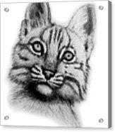 Baby Bobcat Acrylic Print by Nick Gustafson