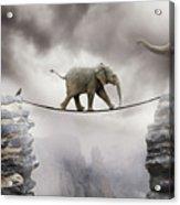 Baby Elephant Acrylic Print by by Sigi Kolbe