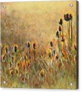 Backlit Thistle Acrylic Print by Frances Marino