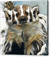 Badger - Guardian Of The South Acrylic Print by J W Baker