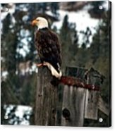 Baldy On A Post Acrylic Print by Don Mann
