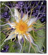 Bali Dream Flower Acrylic Print by Christopher Beikmann