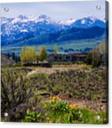 Balsamroot Flowers And North Cascade Mountains Acrylic Print by Omaste Witkowski