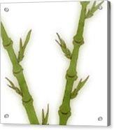 Bamboo Acrylic Print by Frank Tschakert