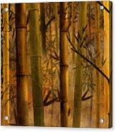 Bamboo Heaven Acrylic Print by Bedros Awak