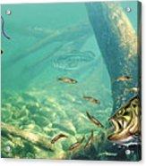 Bass Lake Acrylic Print by JQ Licensing