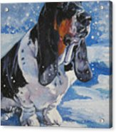 basset Hound in snow Acrylic Print by Lee Ann Shepard