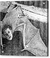 Bat Man Acrylic Print by Arline Wagner