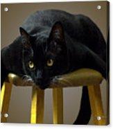 Batcat Acrylic Print by Tom Buchanan