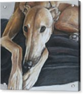 Bauregard Acrylic Print by Charlotte Yealey