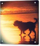 Beach Dog Acrylic Print by Paul Topp
