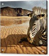 Beach Zebra Acrylic Print by Carlos Caetano