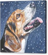 Beagle In Snow Acrylic Print by Lee Ann Shepard