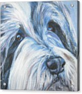 Bearded Collie Up Close In Snow Acrylic Print by Lee Ann Shepard