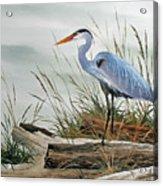Beautiful Heron Shore Acrylic Print by James Williamson