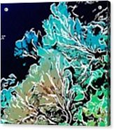 Beautiful Sea Fan Coral 1 Acrylic Print by Lanjee Chee