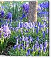 Beautiful Spring Day Acrylic Print by Carol Groenen