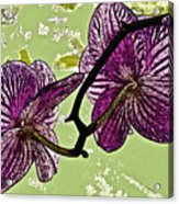 Behind The Orchids Acrylic Print by Gwyn Newcombe