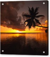 Bending Palm Acrylic Print by Ron Dahlquist - Printscapes