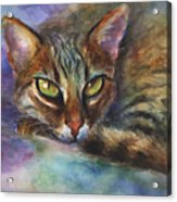 Bengal Cat Watercolor Art Painting Acrylic Print by Svetlana Novikova