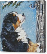 bernese Mountain Dog puppy and nuthatch Acrylic Print by Lee Ann Shepard