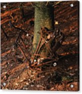 Bicycle Abandoned In A Forest Acrylic Print by Bernard Jaubert