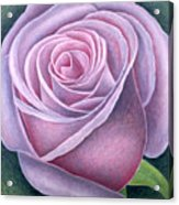 Big Rose Acrylic Print by Ruth Addinall