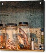 Biology - Biology 101 Acrylic Print by Mike Savad