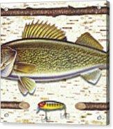 Birch Walleye Acrylic Print by JQ Licensing