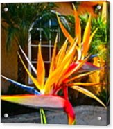 Birds In Paradise Acrylic Print by Gwyn Newcombe
