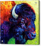 Bison Head Color Study IIi Acrylic Print by Marion Rose