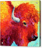Bison Head Color Study Iv Acrylic Print by Marion Rose