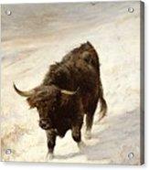 Black Beast Wanderer  Acrylic Print by Joseph Denovan Adam