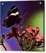 Black Butterfly With Oil Effect Acrylic Print by Tom Prendergast