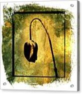Black Tulip Acrylic Print by Bernard Jaubert