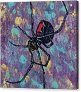 Black Widow Acrylic Print by Michael Creese