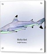 Blacktip Shark Acrylic Print by Ralph Martens