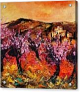 Blooming Cherry Trees Acrylic Print by Pol Ledent
