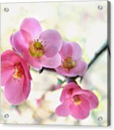Blossoms Acrylic Print by Marion Cullen