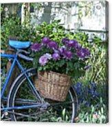 Blue Bike Acrylic Print by Cheri Randolph