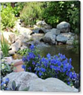 Blue Flowers And Stream Acrylic Print by Corey Ford