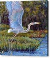 Blue Heron In Flight Acrylic Print by Susan Jenkins